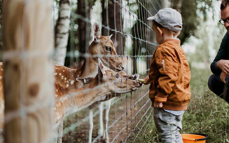 How to Teach Your Kids to Respect and Conserve Wildlife